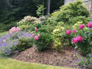 Your flowerbeds could soon look like this!